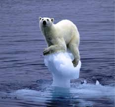 Global Warming.Polar Bear