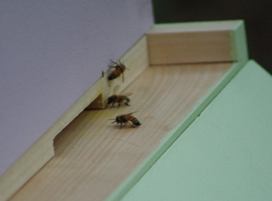 Honeybee.pollen